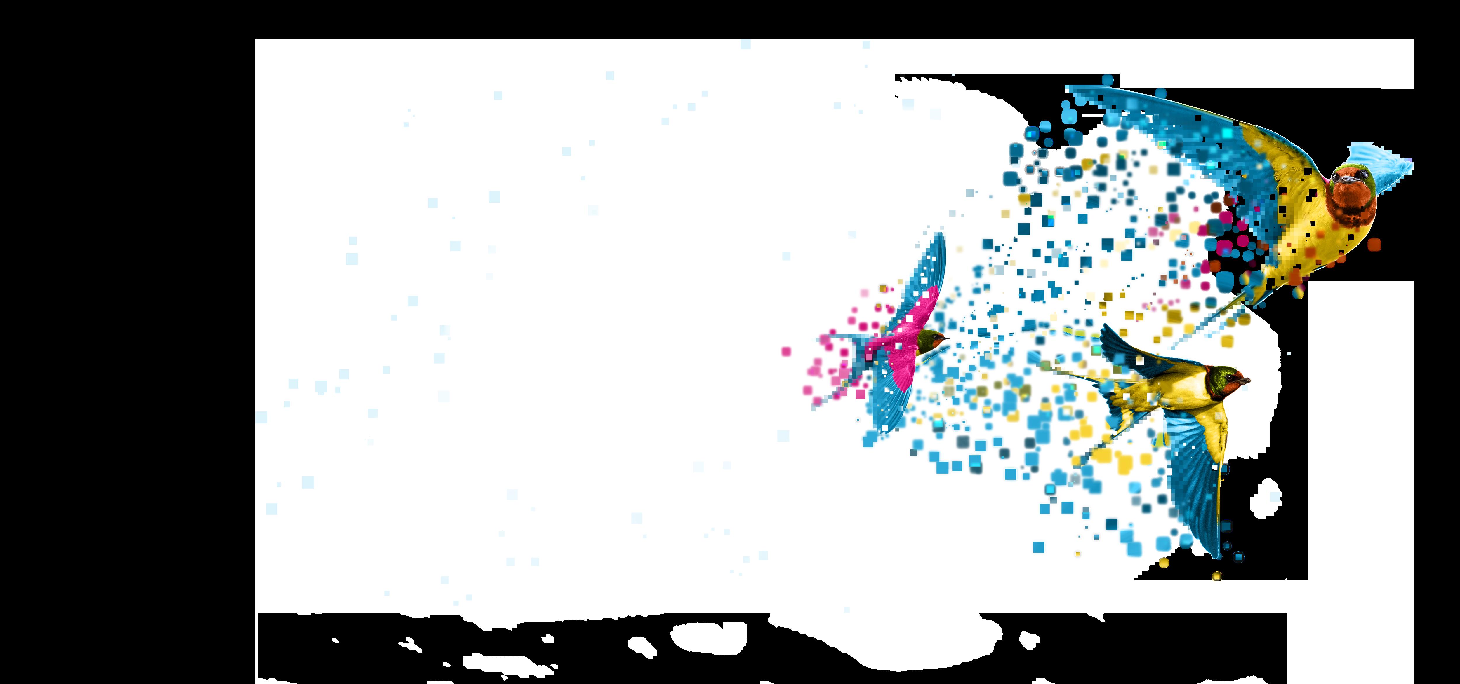 Birds Padlock - Data Migration - Transparent